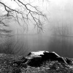An Old Stump, 2011 - za Adore Noir-Silence serija