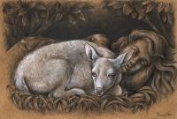 Paula Kunc, ''Bijeli jelen'', kombinirana tehnika – olovka, tuš, 18x21 cm