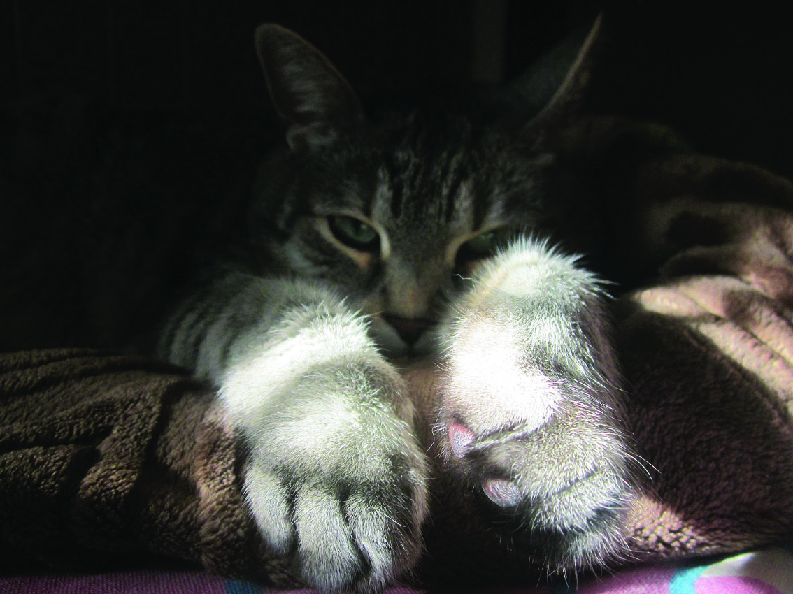 web stranica za upoznavanje ljubitelja mačaka monogamna stranica za upoznavanje
