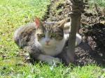 Krešimira Gojanović, ''Mačka u vrtu''