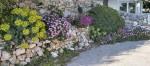Višnja Peter, ''Proljetni cvat''