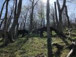 Ivana Keser, ''Zraka sunca, divlji velebitski konji, Velebit, Premužićeva staza 1'', digitalna fotografija, 41x55 cm
